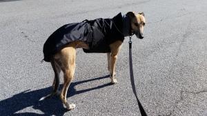 Payton in Jacket