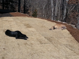 Johnny and his new pal Payton enjoying the winter sun after a few laps around the yard.